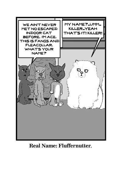 Indoor Cat Meets The Outsiders